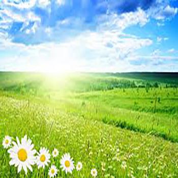 daisy-green-field-bright